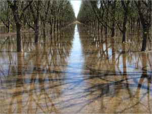Pecan Grove in the South Valley